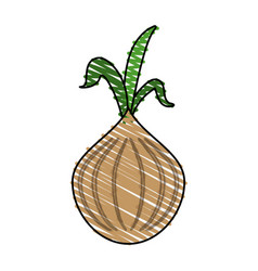 garlic food doodle vector image