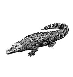 hand drawn crocodile black-white figure vintage vector image