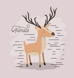 moose animal caricature in color background with vector image