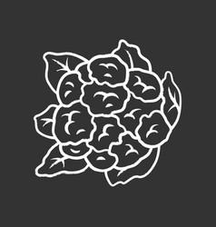 cauliflower chalk icon vector image