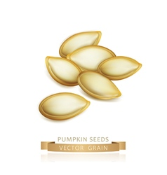 Pumpkin seeds isolated on white background vector