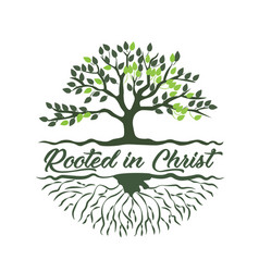 Rooted in christ text design vector