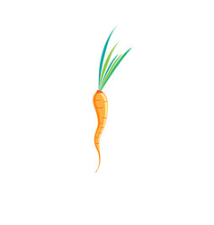 sign of bright carrots vector image vector image