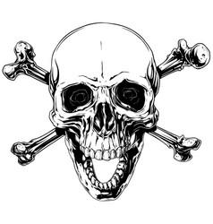 graphic human skull with crossed bones vector image vector image