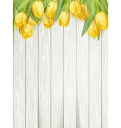 Yellow tulips EPS 10 vector image