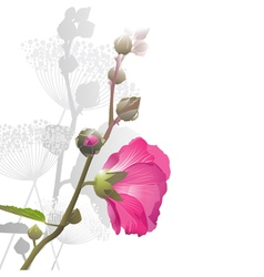Malva Flower arrangement vector image