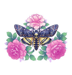 Deaths-head hawk moth with pink roses vector