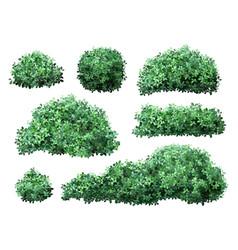 Realistic garden shrub nature green seasonal bush vector