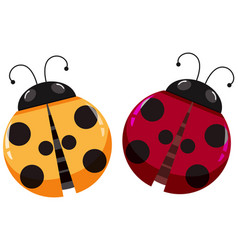 Yellow and red ladybugs on white background vector
