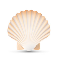 scallop seashell beauty exotic souvenir vector image