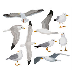 Beautiful seagull set gray and white sea bird in vector