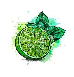Fresh lime with leaves and mint from a splash of vector