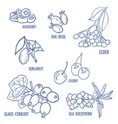 Set of berries for autumn beverages vector