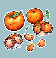 Set of color cartoon stickers of tangerine the vector