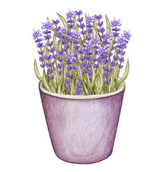 Watercolo lavender tin pot provence vector