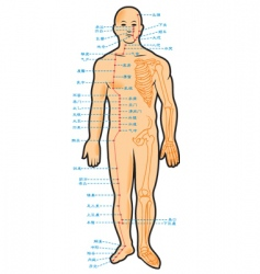 chinese acupuncture scheme vector image vector image