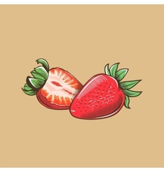 Strawberry in vintage style Colored vector image