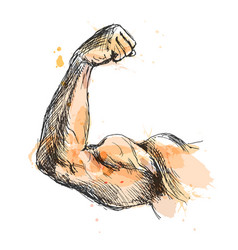 Colored hand sketch biceps vector