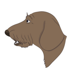 dog portrait profile dachshund look down vector image