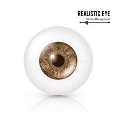 photo realistic eyeball human retina vector image