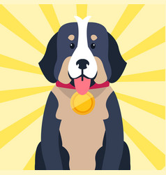Bernese mountain dog with award on neck isolated vector