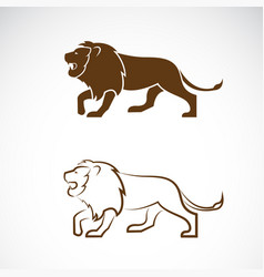 male lion design on white background wild vector image