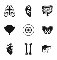 Structure of body icons set simple style vector