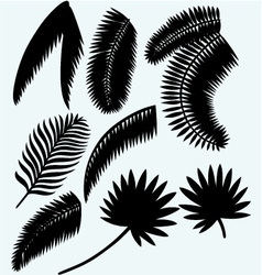 Collection set of palm leaves vector image