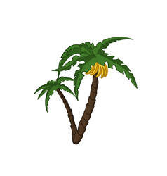 Banana palm tree in cartoon style vector