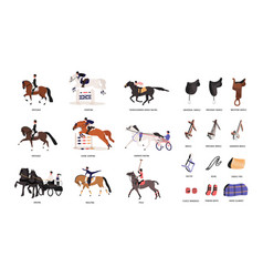 collection various horse gaits and tools vector image