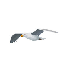 Seagull flying in the sky gray and white sea bird vector