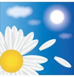 spring daisies on a background of sky vector image vector image