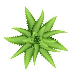 Aloe vera plant top view icon cartoon style vector