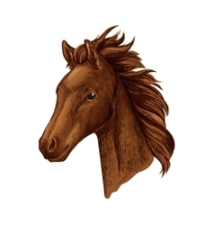 Brown mare horse head sketch with arabian filly vector