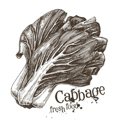 cabbage logo design template fresh vector image