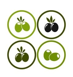 Set colorful olives vector