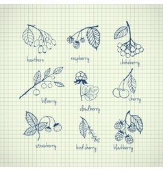 Set of garden and wild hand-drawn berries vector image