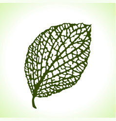 decorative leaf isolated natural detailed macro vector image