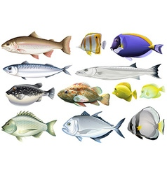 Different kind of ocean fish vector image