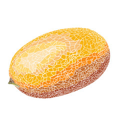 hand-drawn sketch melon in color isolated on vector image