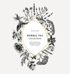 Vintage medicinal herbs card or invitation design vector