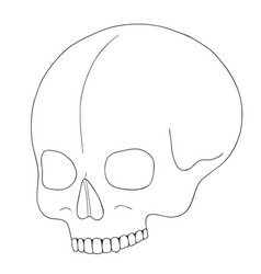 a human skull on white background with single vector image