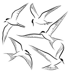 flying tern sketches vector image
