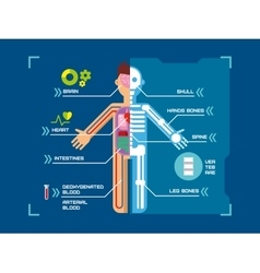 Human Body Anatomy Infographic Flat Design on Blue vector image
