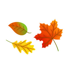 maple leaves autumnal symbols icons set vector image