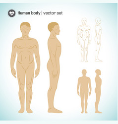 Male body set vector