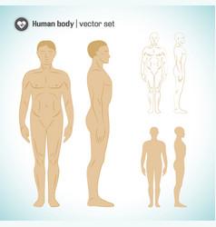 Male body set vector
