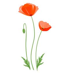 Red poppy flower isolated vector