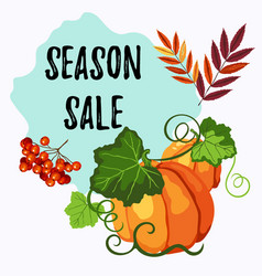 season sale label with pumpkin rowan leaves and vector image