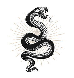 Snake on white background design element for vector